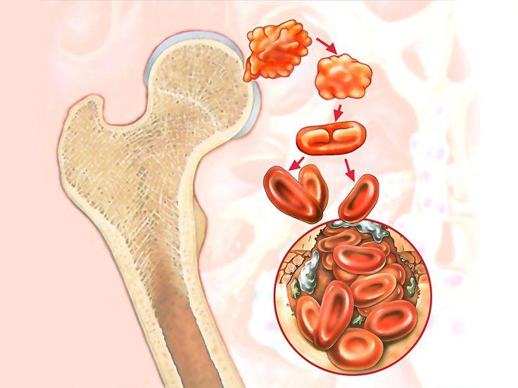 stammzellen  - stem cells