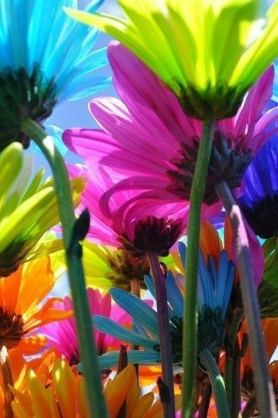 My favorite flower for a long time..I love roses too…but these daisies are amazing   tinkerbell-s-beauty: Gerbera