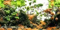 2013 AGA Aquascaping Contest - Aquatic Garden, 200L ~ 320L