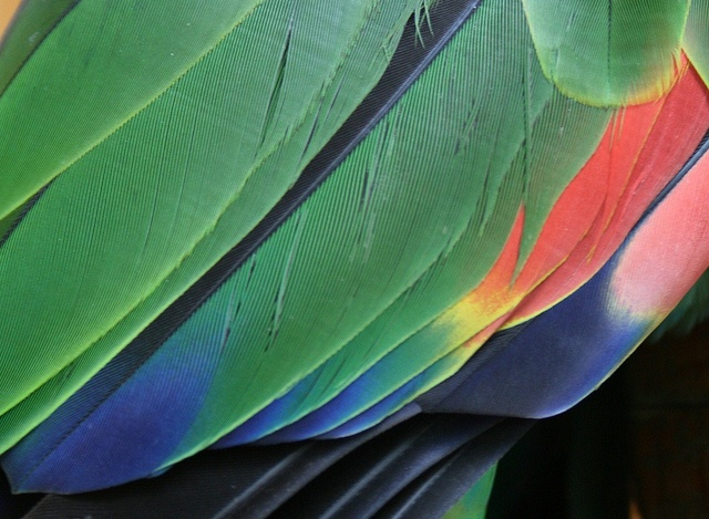 Parrot feathers by Jessolomew, via Flickr