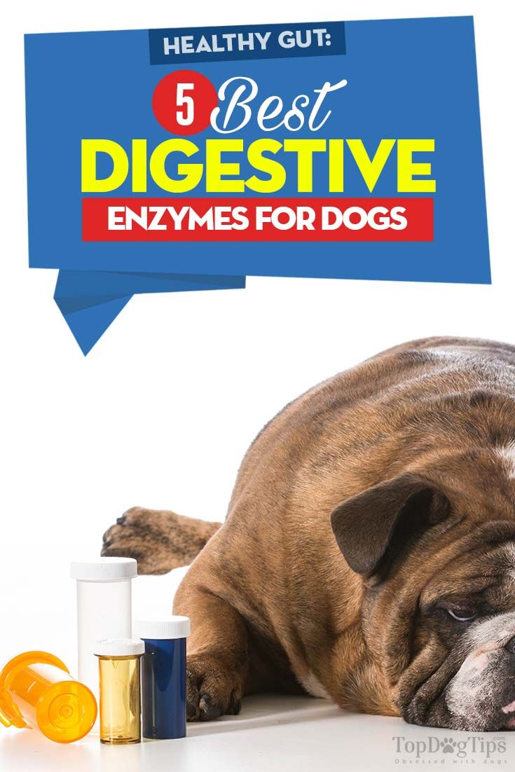 The Best Digestive Enzymes For Dogs To Aid Digestion