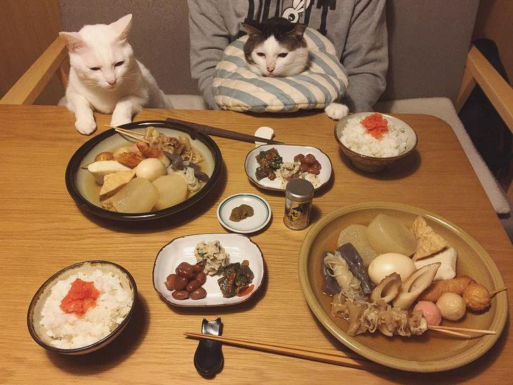 見てる見てる♩練り物好き男子w 昨日から仕込んだ、おでん🍢と明太子のっけご飯。 ちくわぶ売ってなかった〜。 今日は寒くて、お天気なのに伊丹でも粉雪チラリしとった❄︎ #八おこめ #ねこ部 #cat #ねこ #八おこめ食べ物 #おでん