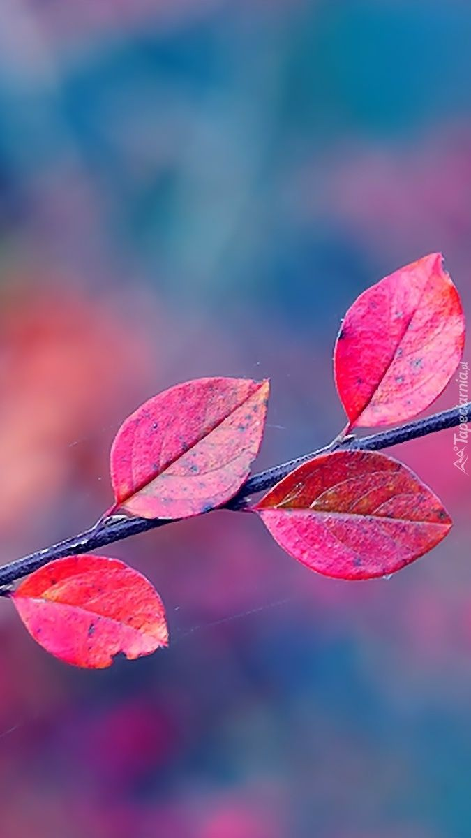 Jesienne Barwy Plants Illustration