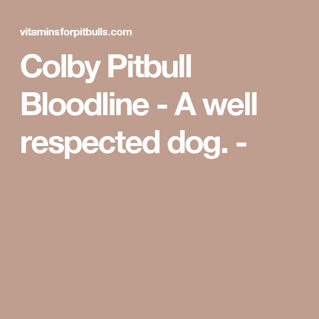 Colby Pitbull Bloodline - A well respected dog. -