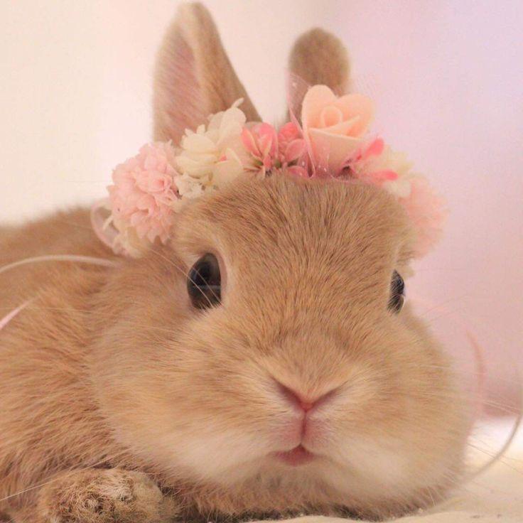 будет самые милые кролики картинки много для волос разрабатывается