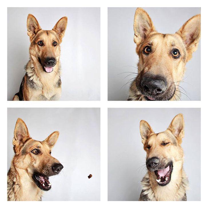Barınak Köpekleri İle Çekilmiş Büyüleyici Fotoğraflar #fotoğraf #köpek #hayvan #sanat