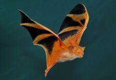 Orange painted bat/oooo, pretty!