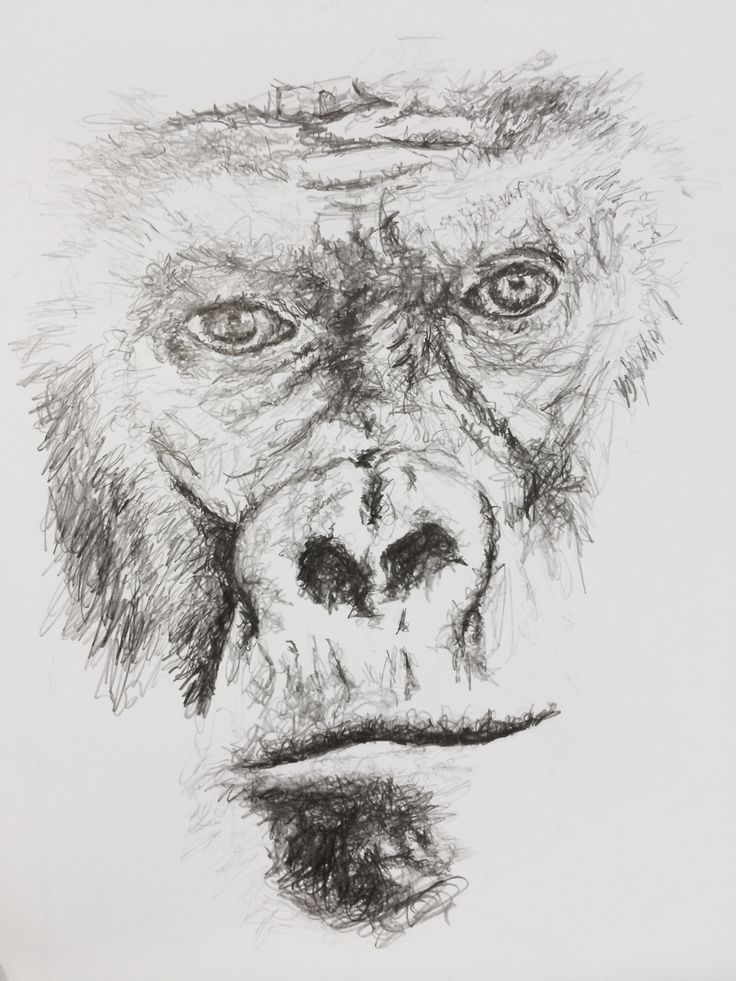 Gorilla sketch face portrait pencil miami life magazine for How to find inspiration for drawing