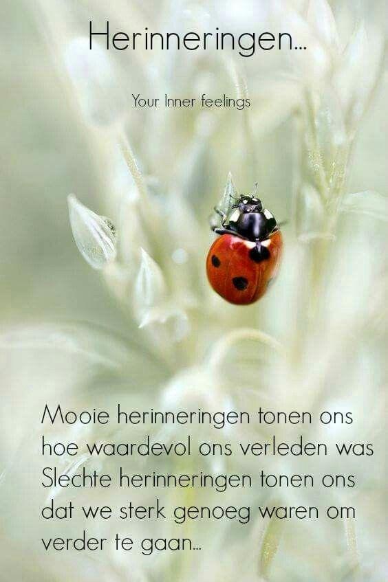 #herinneringen