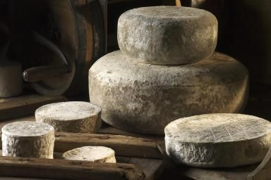 A selection of maturing cheeses at the Northumberland Cheese Company. - Duncan Davis/Britain On View/Getty Images