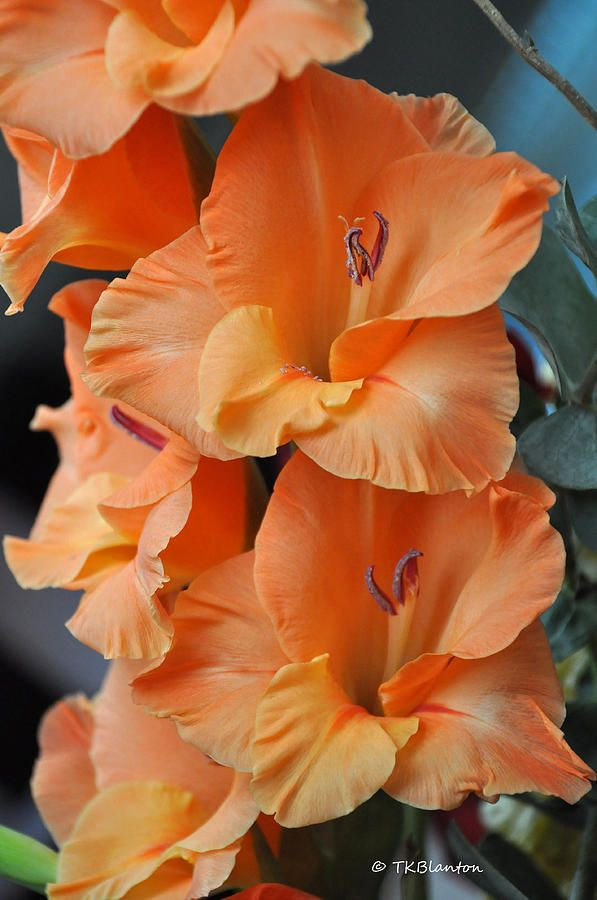 Gladiolus: August birth flower. Im going to use this for Brooklyns part of my thigh tattoo