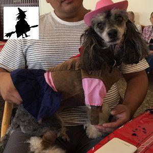 dog halloween costume cow girl dog costume by belladoggie on etsy
