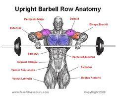 Upright Barbell Row Anatomy: Deltoids, Biceps, Upper Chest