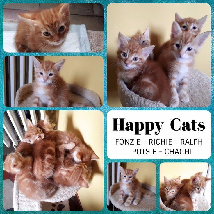 """Milano: GLI """"HAPPY CATS"""", TENERISSIMI MICINI IN ADOZIONE!: #regalo #gattini #gatti #milano Vai all'annuncio:"""