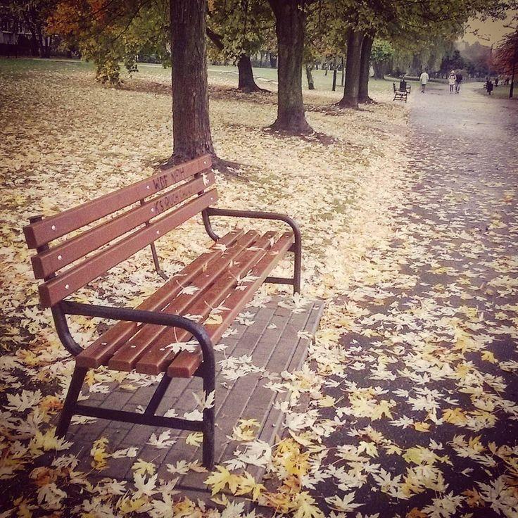 Świeżo zmoczone deszczem - nie siadać :) ☔ ☔  #park #city #lodz #goodmorning #autumn #autumnleaves #leaves #jesień #jesienzjestrudo #rain #trees #fall #winteriscoming #wet #yellow #brown #rainyday