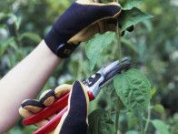 Discover various pruning tools that will help keep your garden in top shape with this photo gallery from HGTV Gardens.