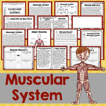 Muscular System mini-unit: Muscular system resources can be difficult to find, but not anymore! Look no further for informative, engaging printables and activities to teach the muscular system! Low-prep pages are perfect for the busy teacher!