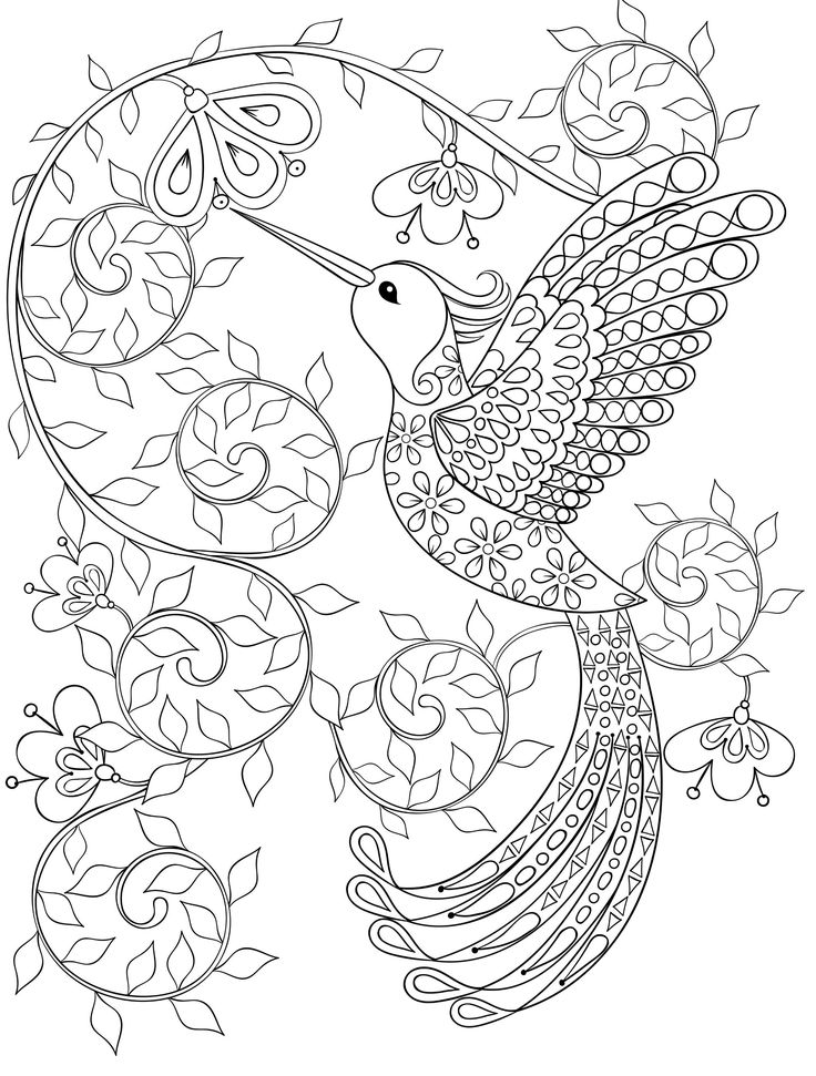 Hummingbird coloring pages for adults, free dwonloadable