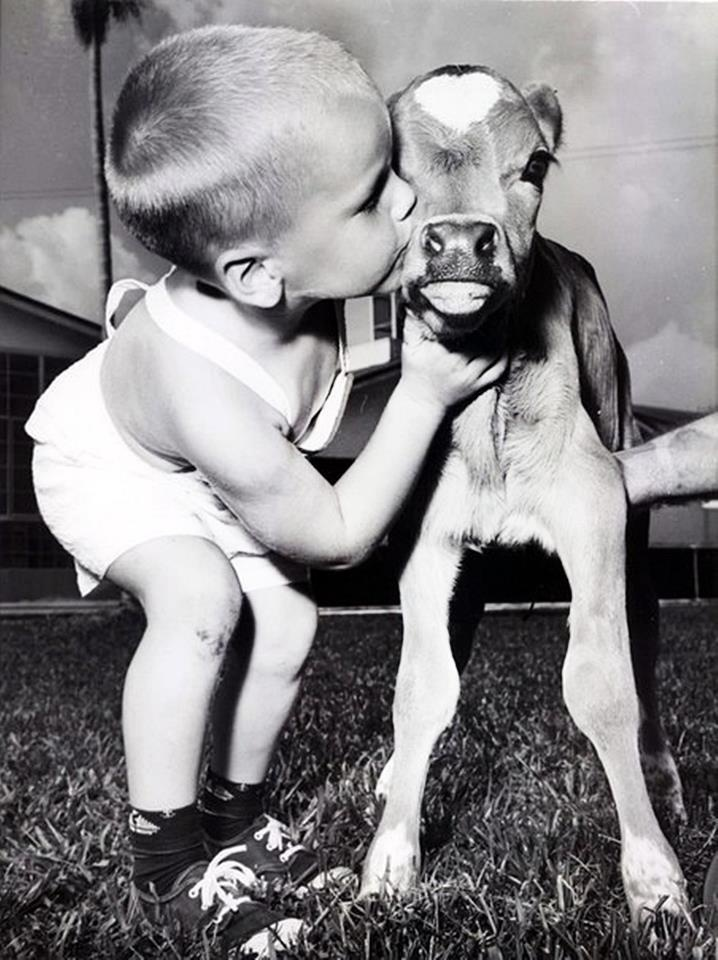 Baby human kisses baby cow