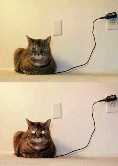 How to know when your cat is fully charged. (Caution - Do not actually plug in your cat LOL)
