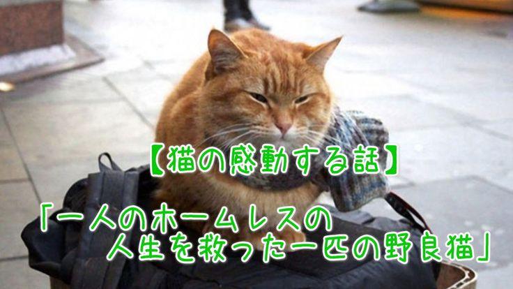 【1分涙腺崩壊】一人のホームレスの人生を救った一匹の野良猫【猫の感動する話】  ロックスターを夢見ていたその男性はジェームズと言う。夢破れ、住むところをなくしホームレスとなった。ドラックに溺れ、コベントガーデンの路上でギターを引きながらなんとか日々を過ごしていたが、ある日1匹の傷ついた猫と出会った。   ☆☆☆☆☆☆ 涙腺崩壊-1分で感動!では、 泣ける話、感動する話を 厳選して配信しています。   音と画像で心震える感動を…。  チャンネル登録すると 新しい動画がスグに見れます☆ ▼▼▼ http://www.youtube.com/subscription_center?add_user=namidaafureru