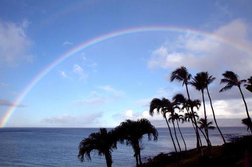 Rainbow sea and palms