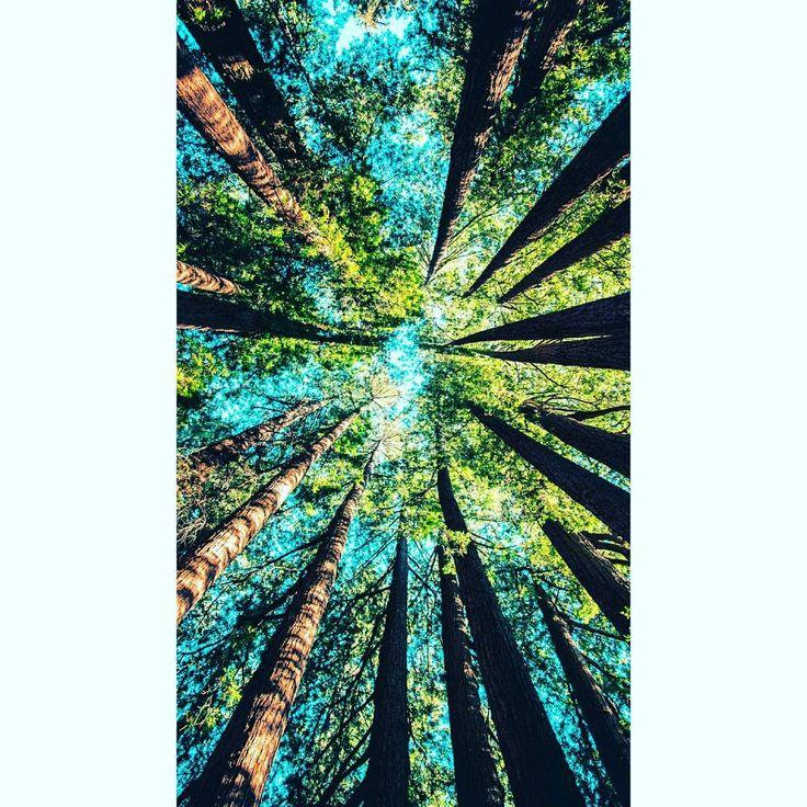 """""""La libertad Sancho es uno de los más preciosos dones que a los hombres dieron los cielos; con ella no pueden igualarse los tesoros que encierran la tierra y el mar: por la libertad así como por la honra se puede y debe aventurar la vida."""" -Miguel de Cervantes  #libertyisland #libertywalk #libertylove #libertystatue #libertys #libertyville  #libertysquare #libertyfabric #libertyloveshop #libertybell #libertyoflondon #libertyprint #libertyordeath #liberty #libertypark #libertybridge…"""