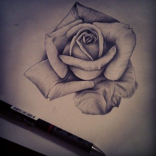 group of roses pencil drawing tumblr art pinterest rose sketch and tattoo. Black Bedroom Furniture Sets. Home Design Ideas