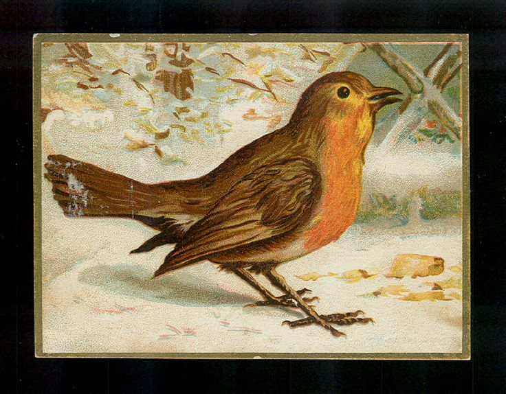 Beautiful Red Breasted Robin-1880s Victorian Trade Card