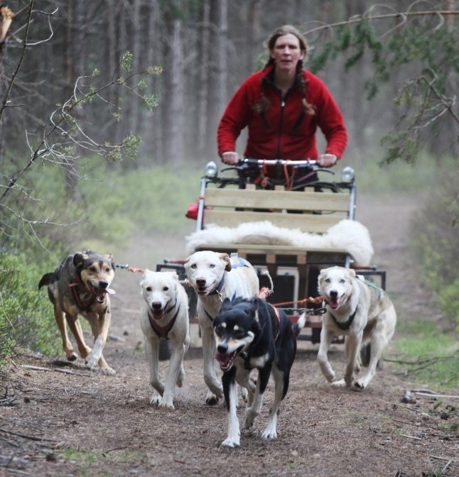 new ways with Nystedt Husky Tur och Natur