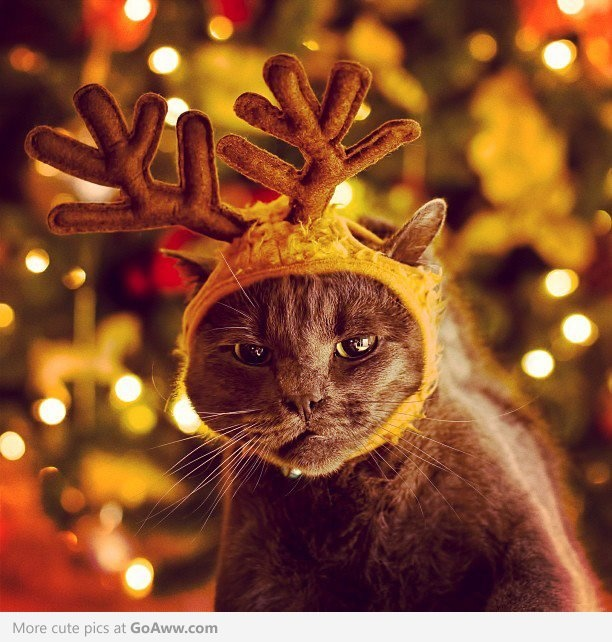 Aww Mom.. I don't want to be one of Santa's reindeer. - goaww.com