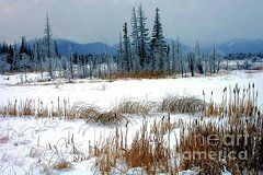 Ducks Unlimited Prints - Winter Serenity  Prints by Roland Stanke
