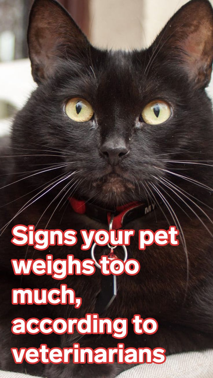Veterinarians reveal 9 signs your pet could be overweight