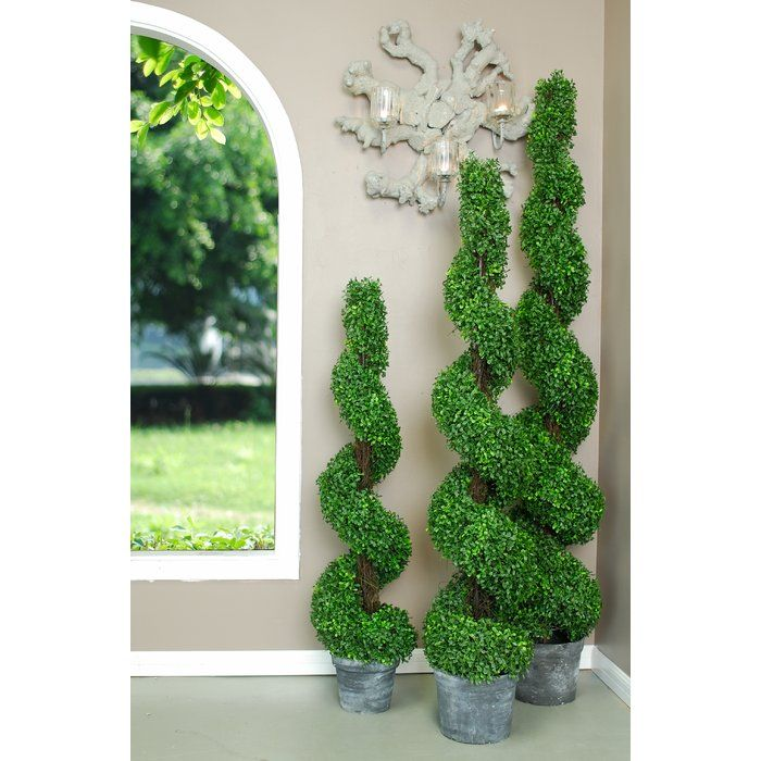 Spiral Boxwood Topiary In Pot Boxwood Topiary Boxwood Landscaping Topiary