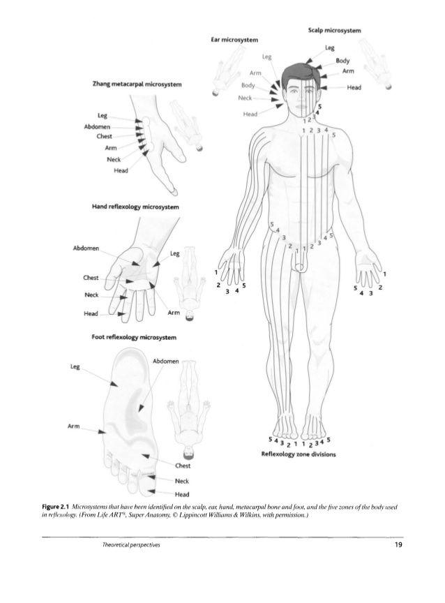 Una vista sagital Pata del Brazo reticular la formación de la corteza cerebral B Vista frontal de la formación de la corteza cerebral reticular 6Leg B ...