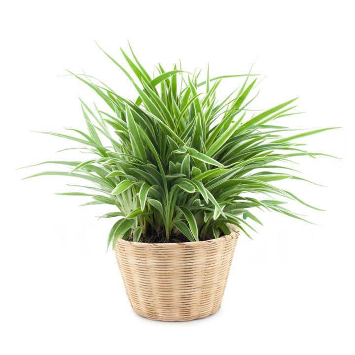10 Low Light House Plants | Indoor Plants That Grow ...