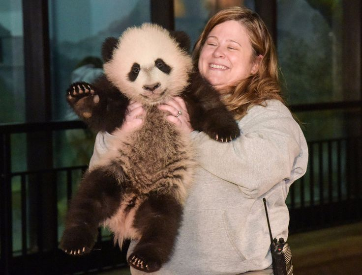 Stop What You Are Doing And Look At Bei Bei The Baby Panda Waving