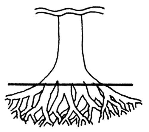 413 best bonsai techniques images on pinterest