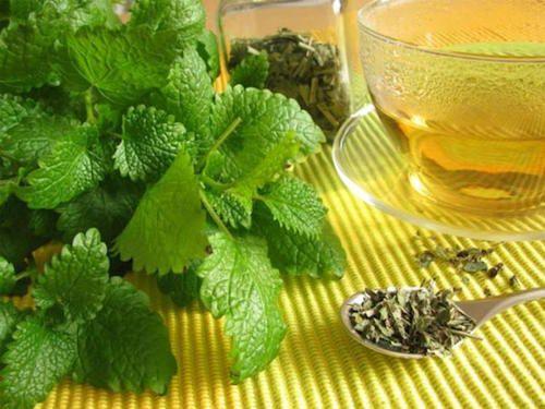 La mélisse est un remède naturel qui peut vous aider à soigner les boutons de fièvre.( coton imbibé de tisane de mélisse)