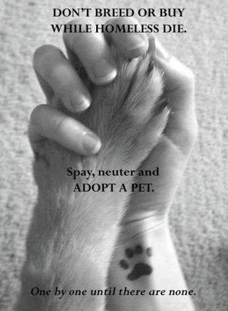 Don't shop...ADOPT!  Over 4 million healthy, adoptable cats & dogs are euthanized every year in North American shelters. Check out www.petfinder.com