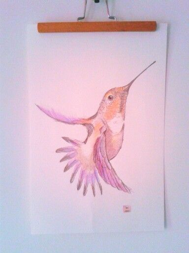 Colored pencil drawing Hummingbird #hummingbird #illustration #drawing