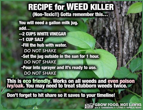 17 Best Images About Remedies From Your Yard On Pinterest