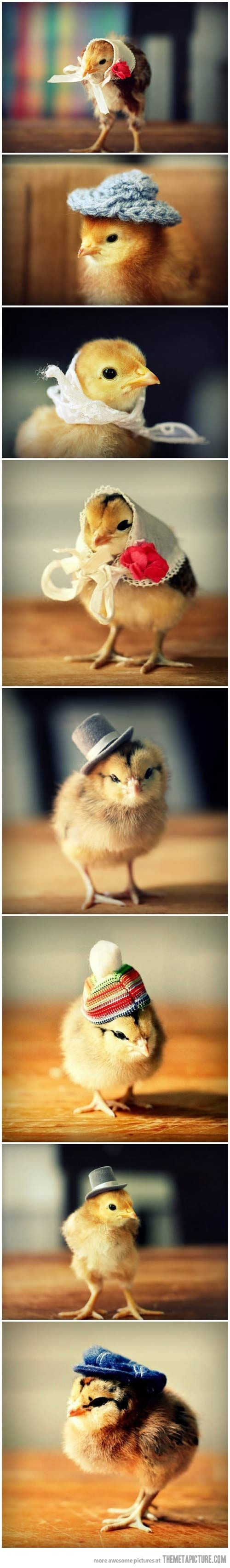 Chicks in hats... This might be the most adorable thing I have ever seen.