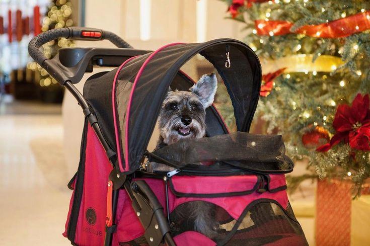 Staying warm and cozy in the Razzberry Pet stroller 😌🎄  -  #toasty #christmasdog #cozy #staywarmmyfriends #happydog #petique #dogstroller #petstroller #catstroller #luxurypets