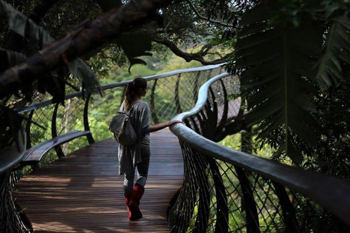 Canapy walk in Kirstenbosch Gardens.  #nature #capetown #travel