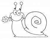 Escargot indiqué