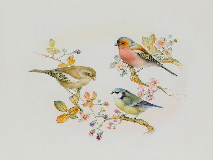 """Edward Julius Detmold - """"Bluetit, greenfinch and goldfinch seated on hawthorn and bramble branches"""""""