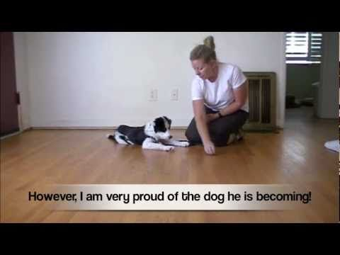 Top Dogs Training Academy Site Youtube Com