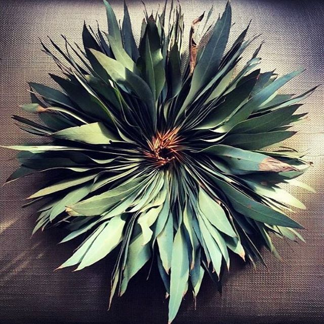 Beautiful Eucalyptus|Threading  #eucalyptus #threading #wallart #art #natural #sustainable #vegan #vegandecor #vegancommunity #vegan #instagood #instagram #instadaily #lisschelemasters #australia #perth
