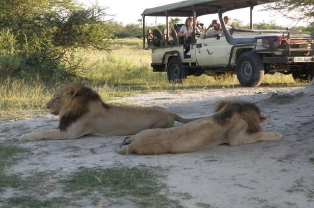 Should a mobile tented safari be something you are interested in, then please do consult with us what the options and budgets are and we will be happy to try and find the most suitable tour for you.